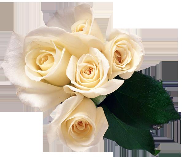Clipart png çiçekler güller 03 10 2013
