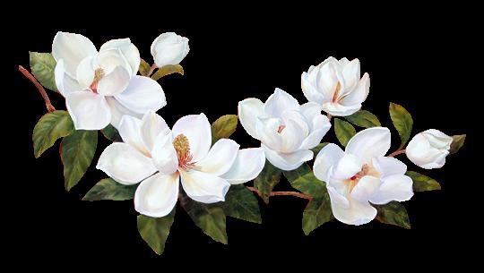Png белые цветы